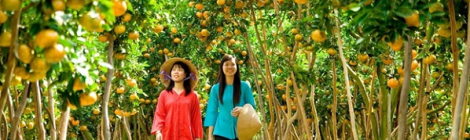 Land of fruits in Mekong Delta
