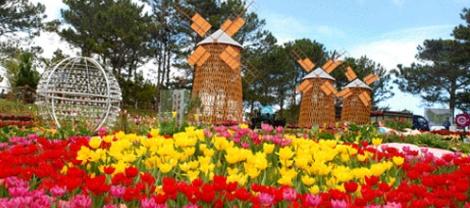 Dalat flowers garden